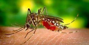 plagas mosquito tigre