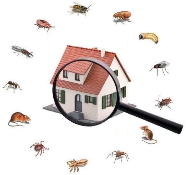 Estas son las plagas más comunes durante los meses de invierno