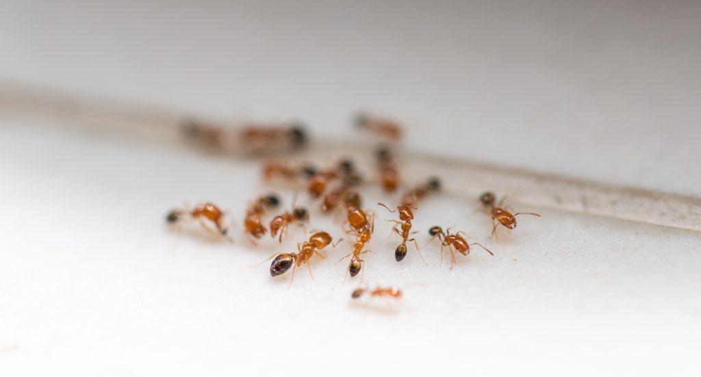 Un hogar sin hormigas