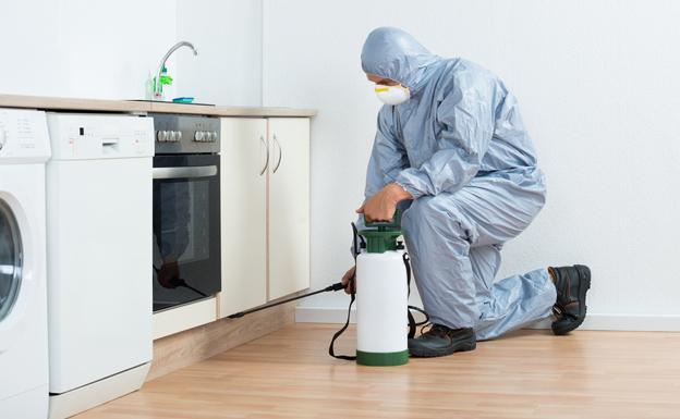 Cómo acondicionar tu casa para evitar plagas