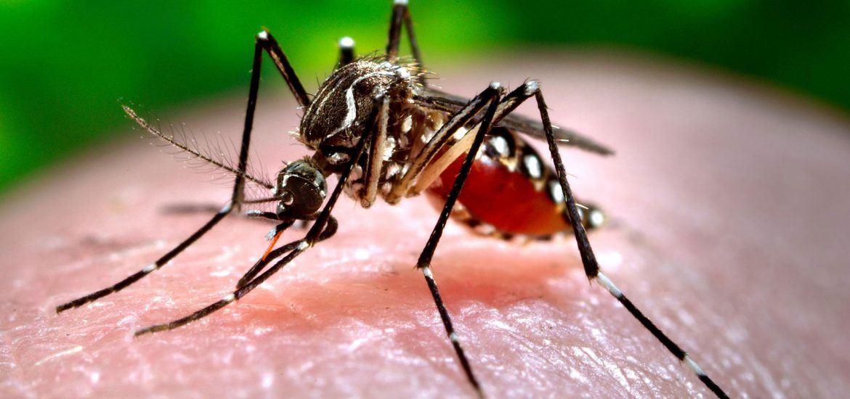 Consejos para el control de plagas ante la llegada del verano