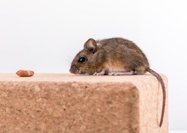 ¿Cómo evitar las plagas de roedores en el jardín?