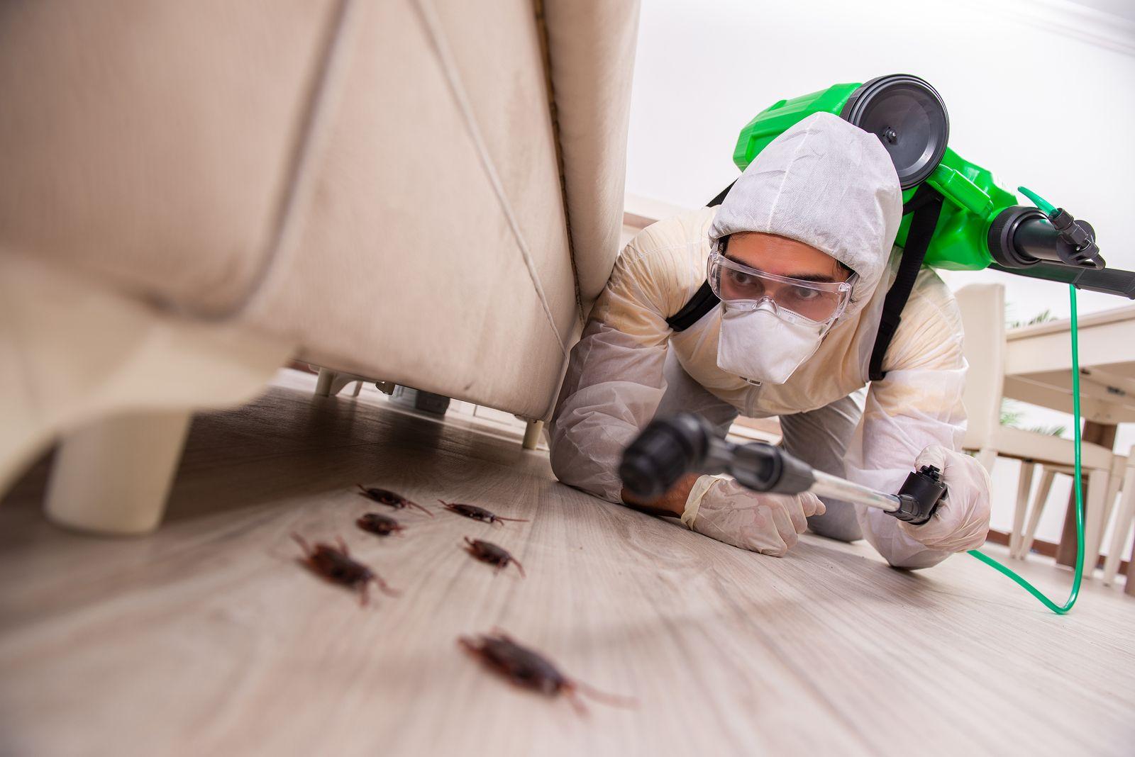 cómo actuar ante una plaga en casa