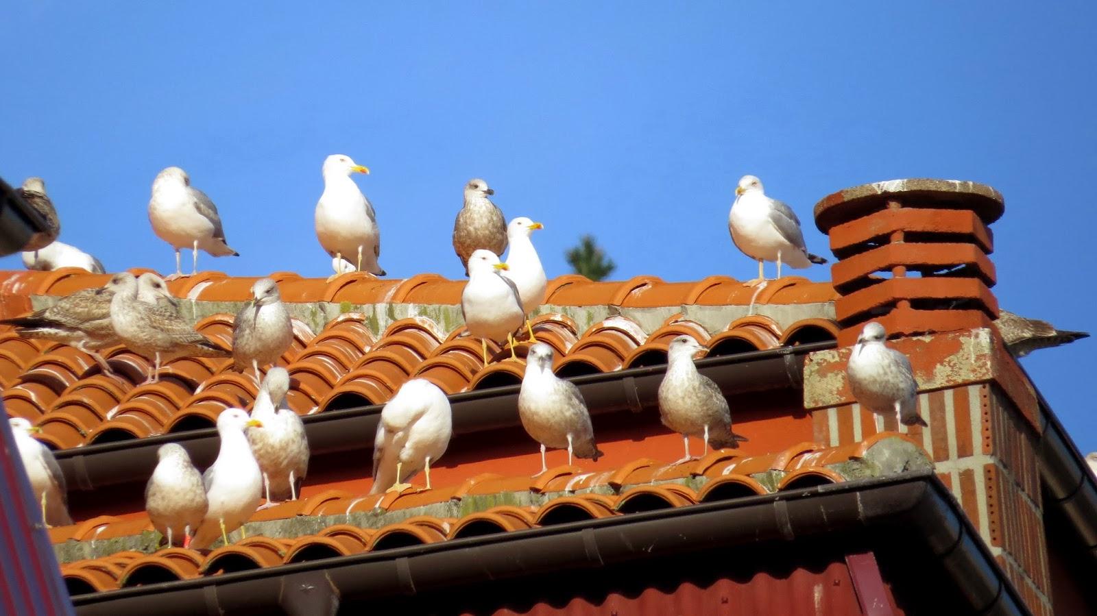 Cómo evitar que los pájaros aniden en tu tejado