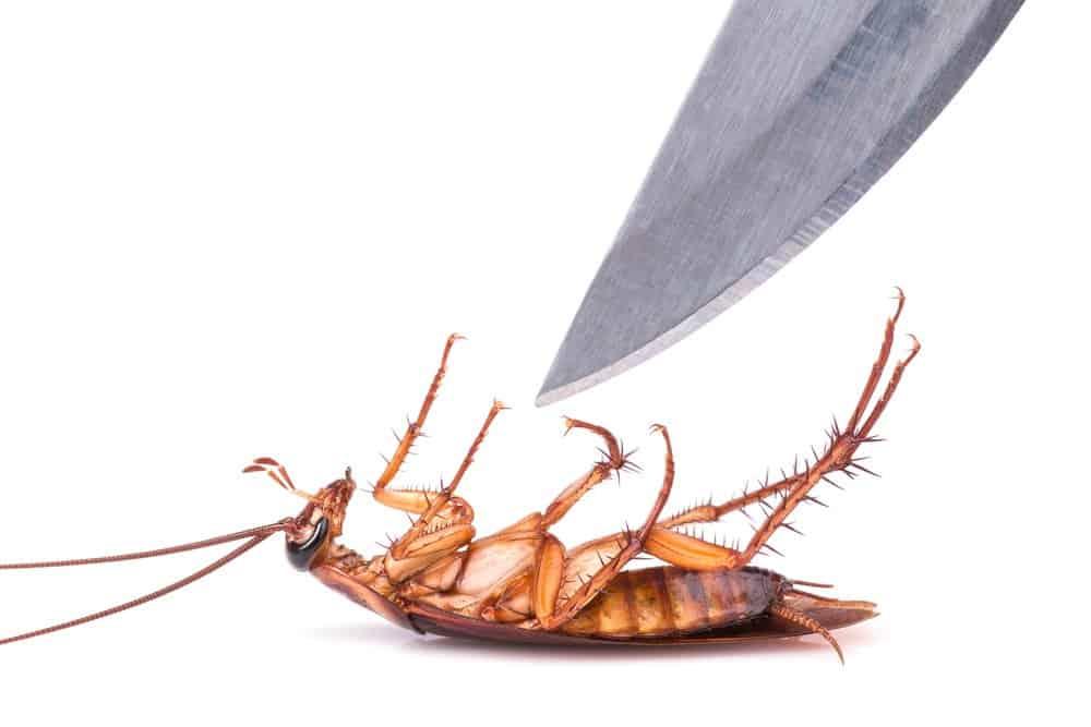 ¿Cómo eliminar las plagas de cucarachas?