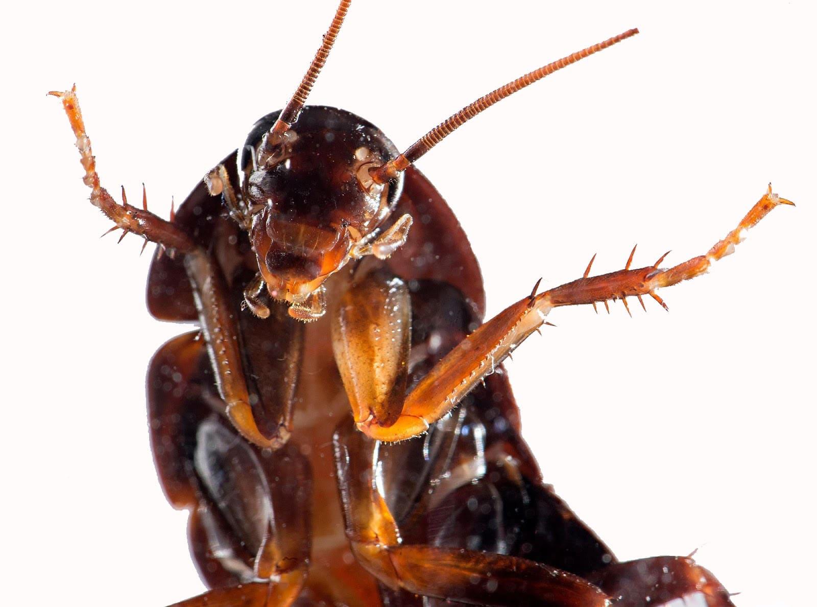Eliminar Plagas de Cucarachas en Valencia