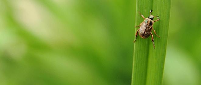 ¿Quémétodosexisten para el control de plagas y vectores?